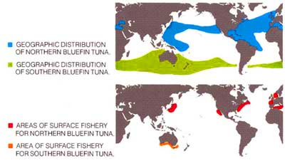 Blue Fin Tuna Map